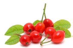 The Benefits of Rosehip Oil